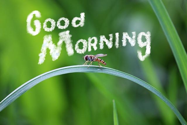 Bom dia Natureza - Mensagens de Bom Dia