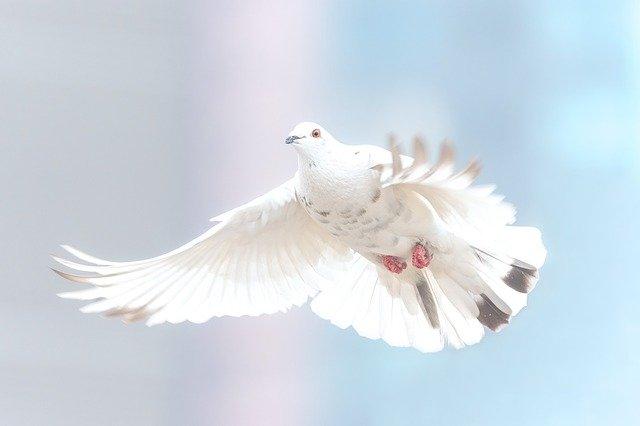promover a paz - Mensagem de Paz